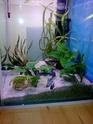 Mon premier aquarium... Photo015