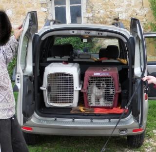 quel vehicule pour transporter vos chiens? - Page 3 Logan_11