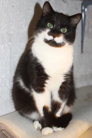 Réglisse-Menthe -noir et blanc - né en 05/2012 Reglis10