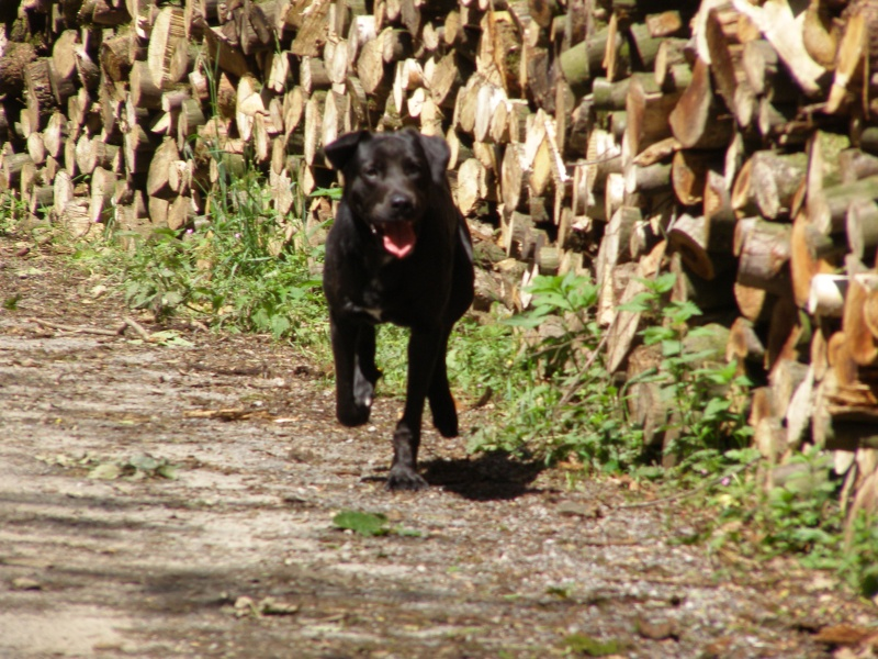 Gohan au bois P5190010