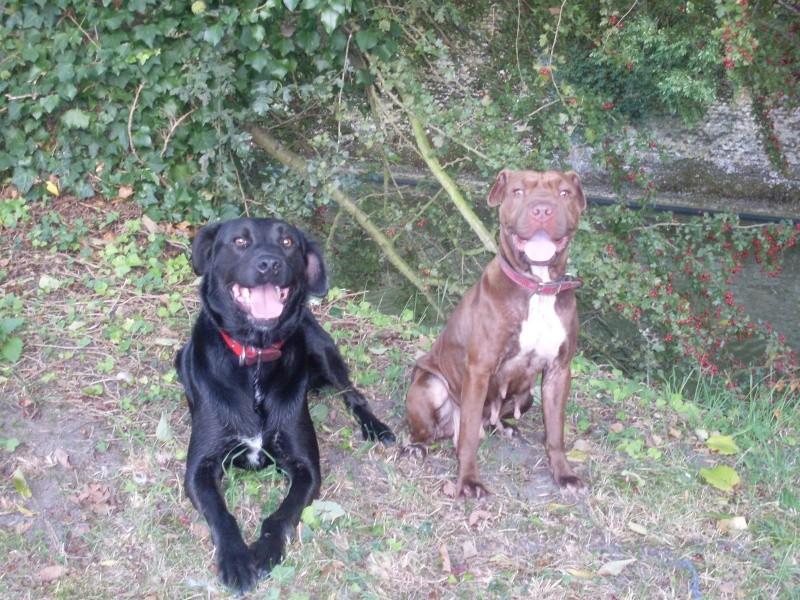Mais deux chiens Sdc11010
