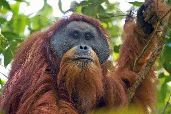 الأنواع المهددة بالانقراض 65367310
