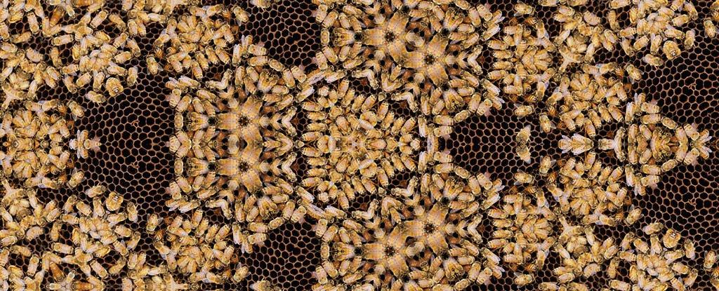 أسرار النحل والكسوف الكلي Bee_ge10