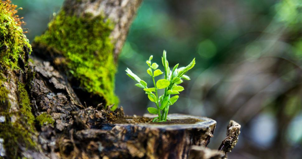دراسة جديدة تتحدى ما قاله داروين عن بداية الحياة على الأرض Beginn10