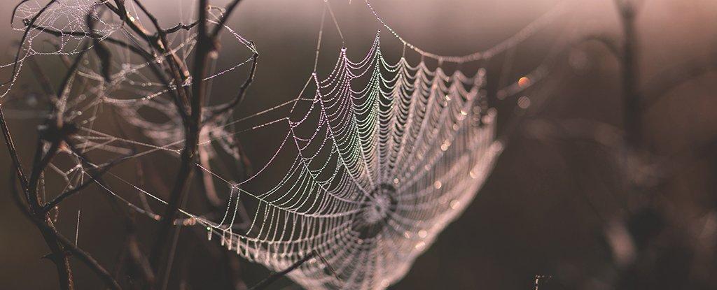 لماذا خيط الحرير أقوى بخمس مراتٍ من الفولاذ؟ Spider10