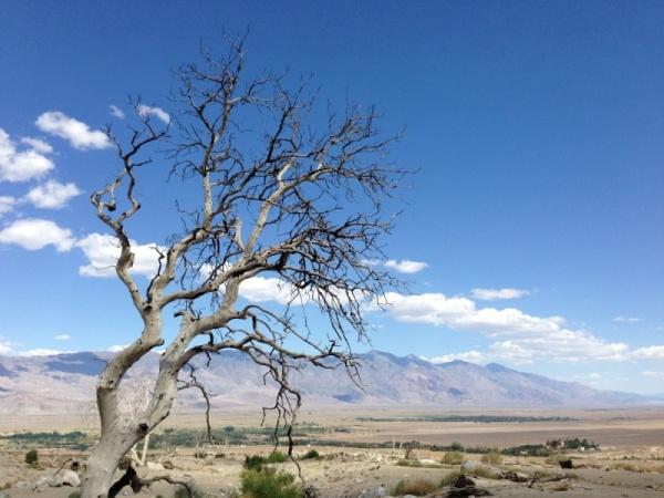ما هي العوامل التي تتسبب في موت الأشجار ؟  Tree-d11