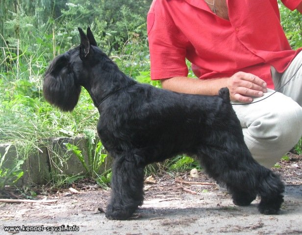 What is your favourit stud dog?? 14f26410