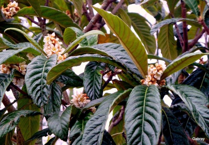 Les arbres, arbustes et plantes préférés des guêpes et frelons. E01--n10