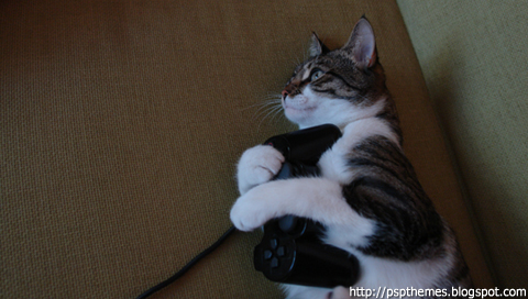 Payes ta chatte!!! Gamer_10