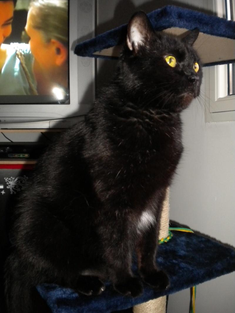 SOREN, 8 ans, câlinou FIV à adopter sans chat (27) Soren412