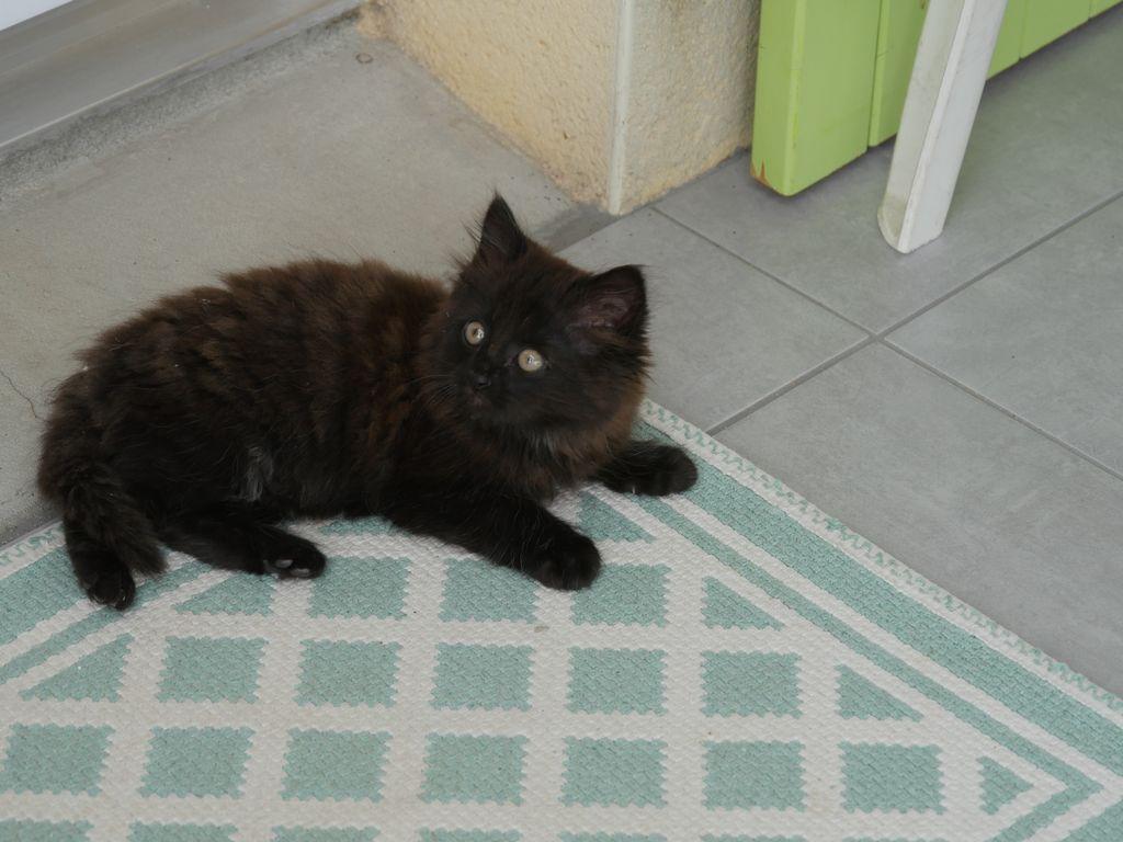 [Donné] Donne chaton angora P1040311