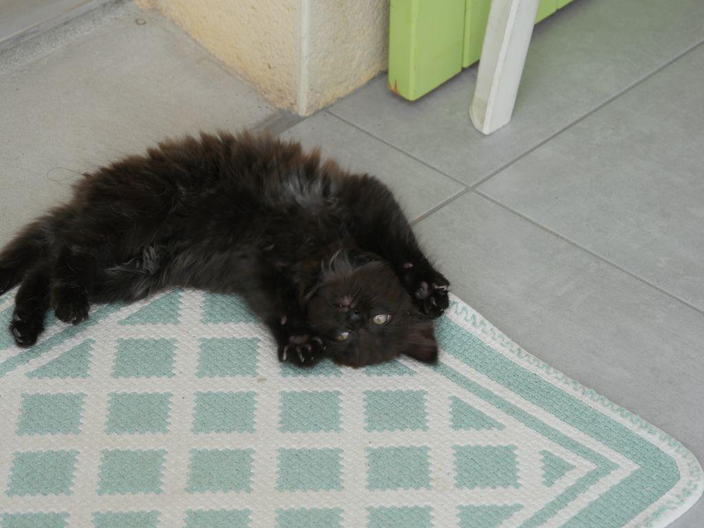 [Donné] Donne chaton angora P1040313