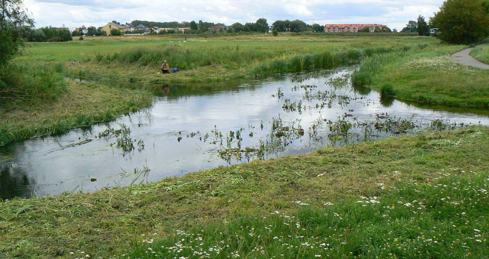 Croisement de rivières sans mélange des eaux - Wagrowiec - Pologne 2014-116