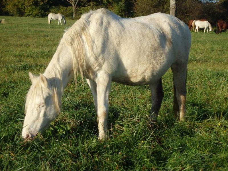 VENUS - ONC poney née en 1987 - adoptée en octobre 2012 par souris73 - Page 7 301010