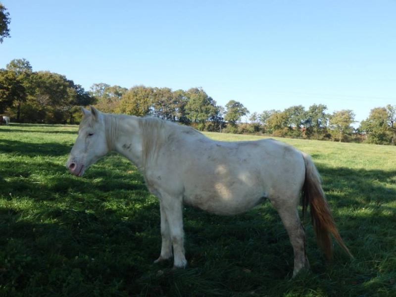 VENUS - ONC poney née en 1987 - adoptée en octobre 2012 par souris73 - Page 7 3010210