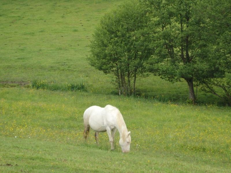 VENUS - ONC poney née en 1987 - adoptée en octobre 2012 par souris73 - Page 7 Venus_10