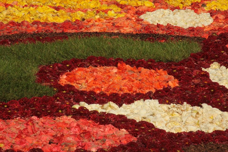 Le tapis de fleurs à la Grand place de Bruxelles Img_0017