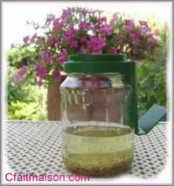 les graines germés ...... Bocal-10