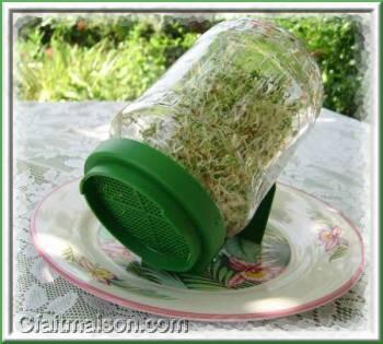 les graines germés ...... Bocal-11
