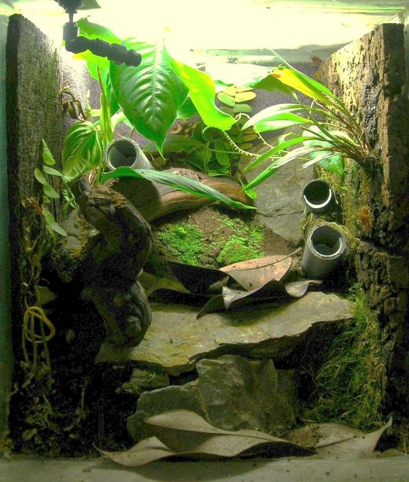 Décoration du terrarium tropical humide Dscn2910