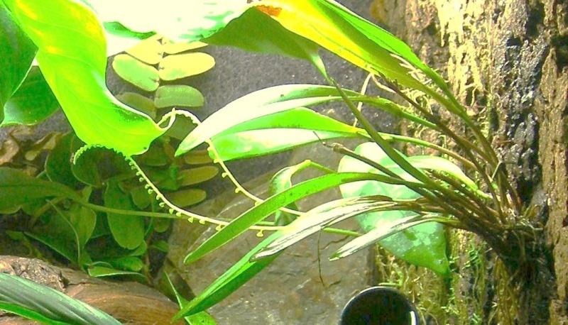Décoration du terrarium tropical humide Dscn2911