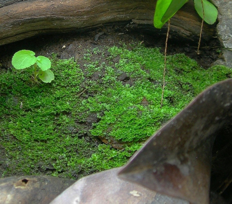 Décoration du terrarium tropical humide Dscn3510