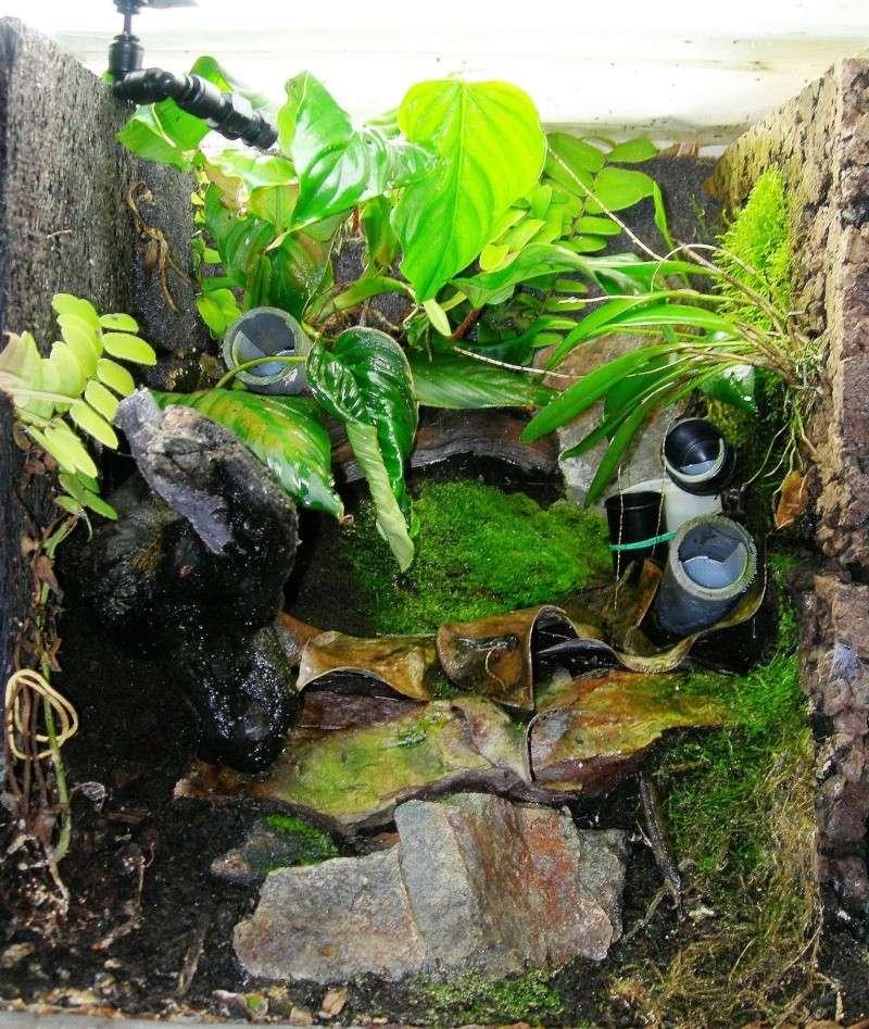 Décoration du terrarium tropical humide Dscn3712