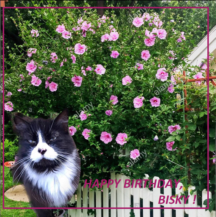 HAPPY BIRTHDAY THREAD - Page 9 Bisky110