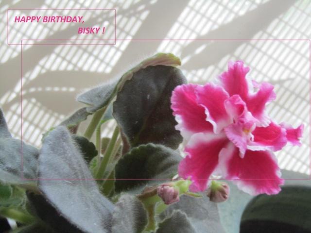 HAPPY BIRTHDAY THREAD - Page 11 Bisky112