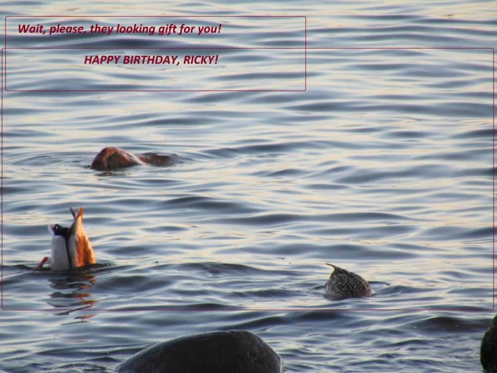 HAPPY BIRTHDAY THREAD - Page 10 Ricky210