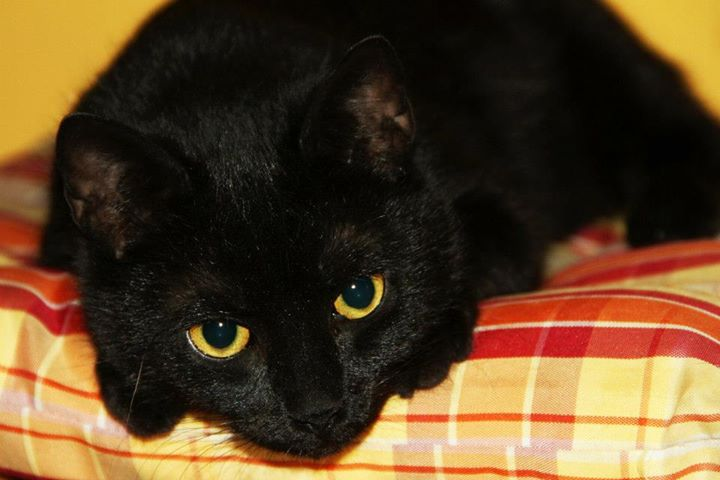 Jeune chatte parfaite pics