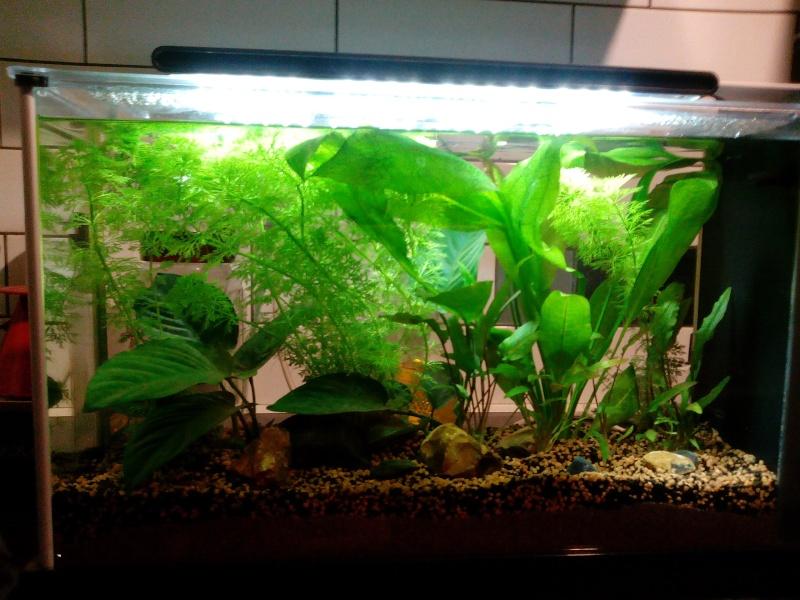 Débutant - autonomie d'un aquarium ? Img_2010