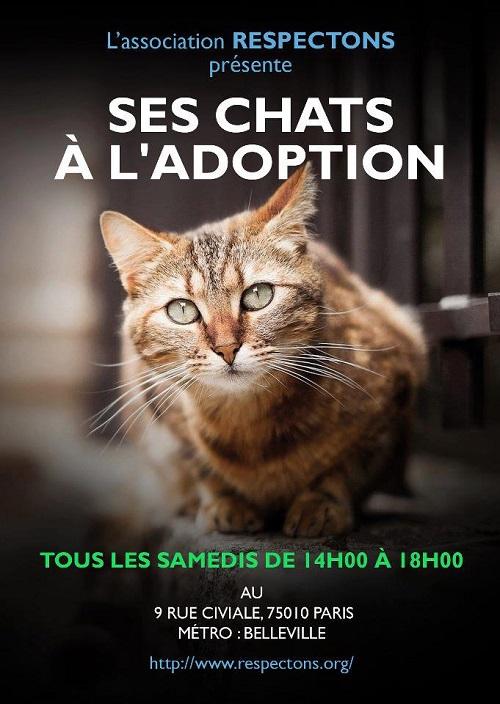 Protection animale - Adoptions Chats chatons, Association Respectons : toutes les semaines (samedi, Paris 10), +  2 fois/mois (Paris 15) 53359010