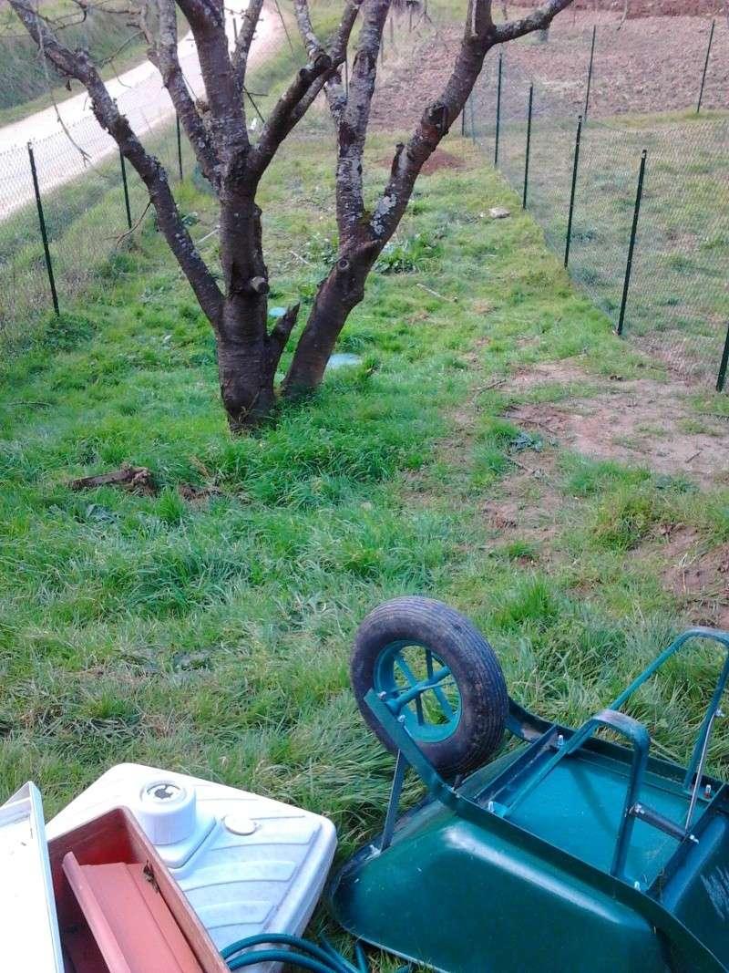 Mon jardin de fainéante Photo010