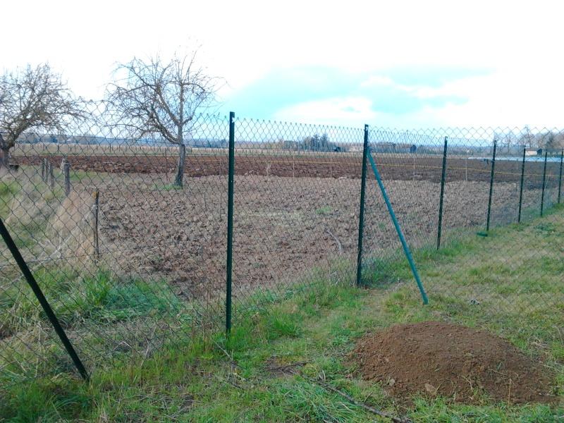 Mon jardin de fainéante Photo011