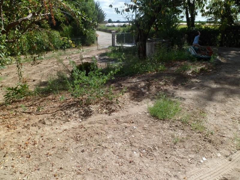 Mon jardin de fainéante Sam_0111