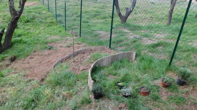 Mon jardin de fainéante Sam_0615
