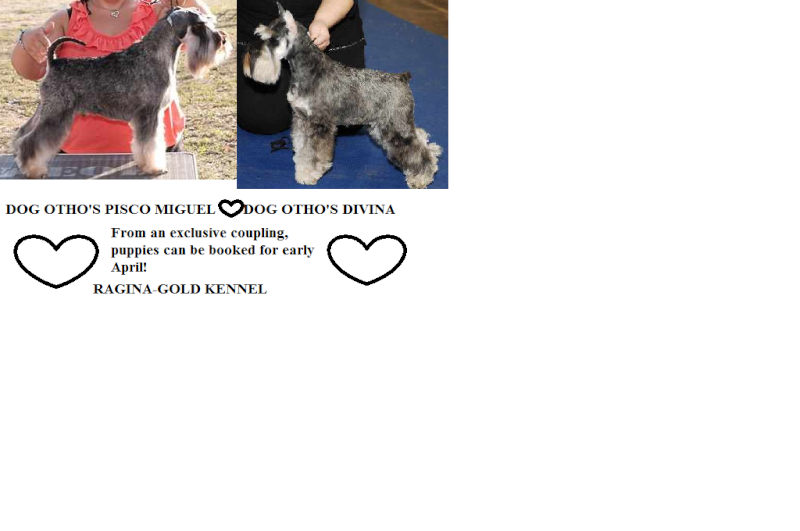 HJCH.DOG OTHO's PISCO & HJCH.DOG OTHO'S DIVINA (salt and papper minis ) Navtel17