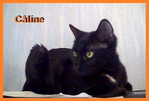 jeune chatte noire images