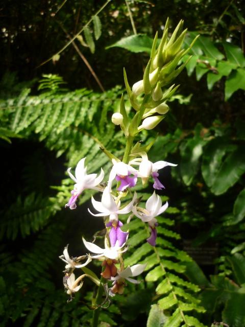 (974) Conservatoire Botanique National de Mascarin - Saint-Leu - Réunion - Page 2 61722710