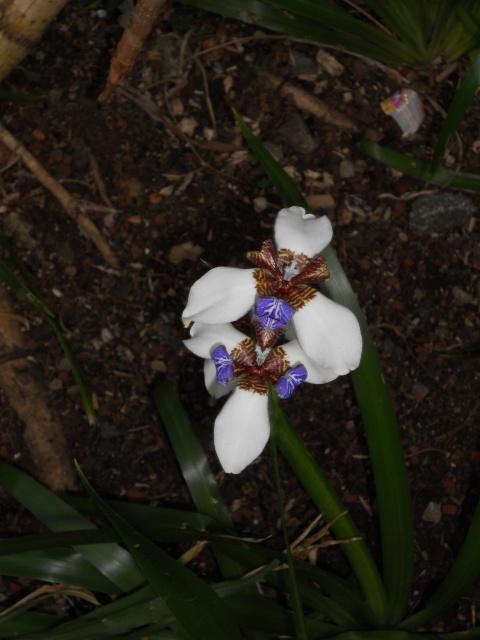 (974) Conservatoire Botanique National de Mascarin - Saint-Leu - Réunion - Page 2 84568410