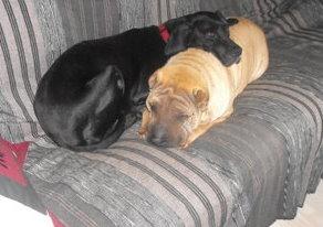 Adopter un chien âgé Dscf1410