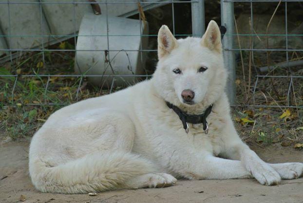 Orca, Husky, âgée de 14 ans née 20 Décembre 2000,  Eden Valley  ASSO39 - Page 4 10462710