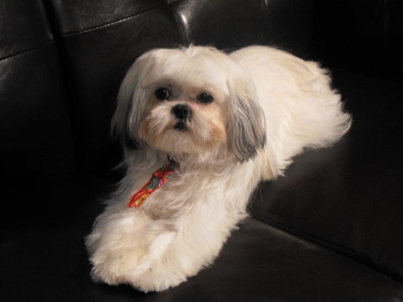 Votre animal de compagnie  favorit ... Lily1110