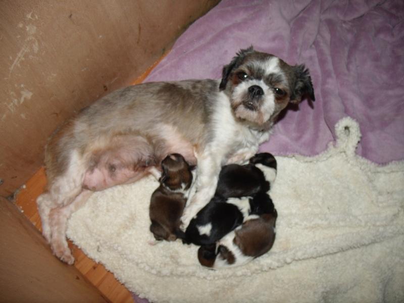 Naissance des 4 bébés de Gladys !! FÉLICITATIONS à Nini (la sage femme) et à la maman  Gedc4910