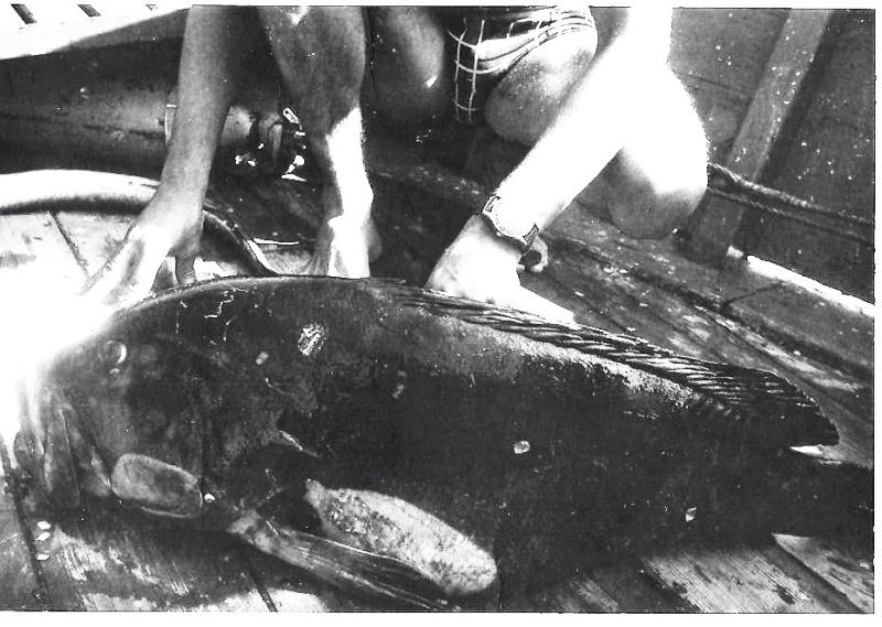 [Plongeurs démineurs] PLONGEURS DÉMINEURS - Page 6 Merou_11