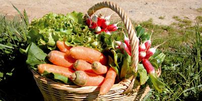 Agriculture biologique : le cadre légal se met en place Agricu10