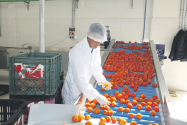 Fruits et légumes Benkirane n'a pas tenu ses promesses  P2_38610