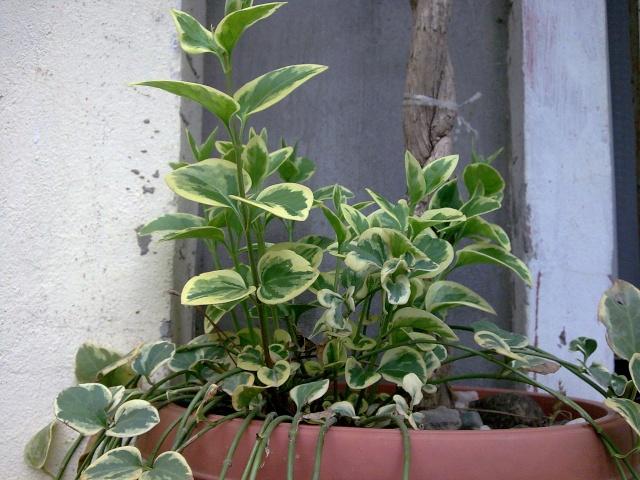 Les débuts de mon petit jardin.... Photo017