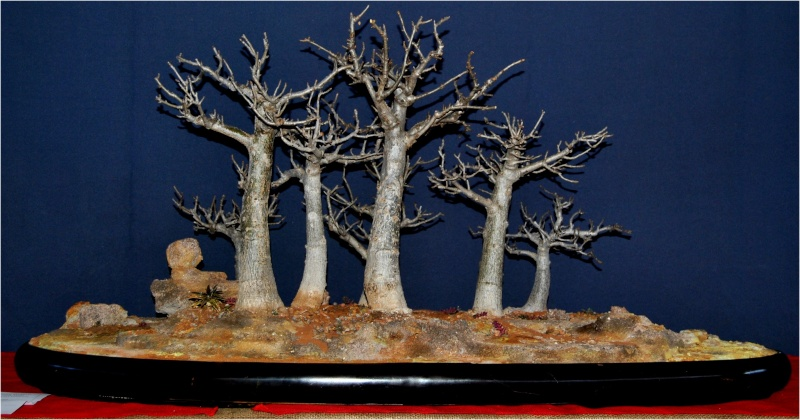 South Africa Brat Regional meeting exhibited trees. G10